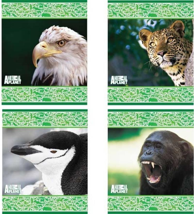 Картинка для Тетрадь школьная Action! Animal Planet 48 листов клетка скрепка AP-AN 4804/5 в ассортименте AP-AN 48