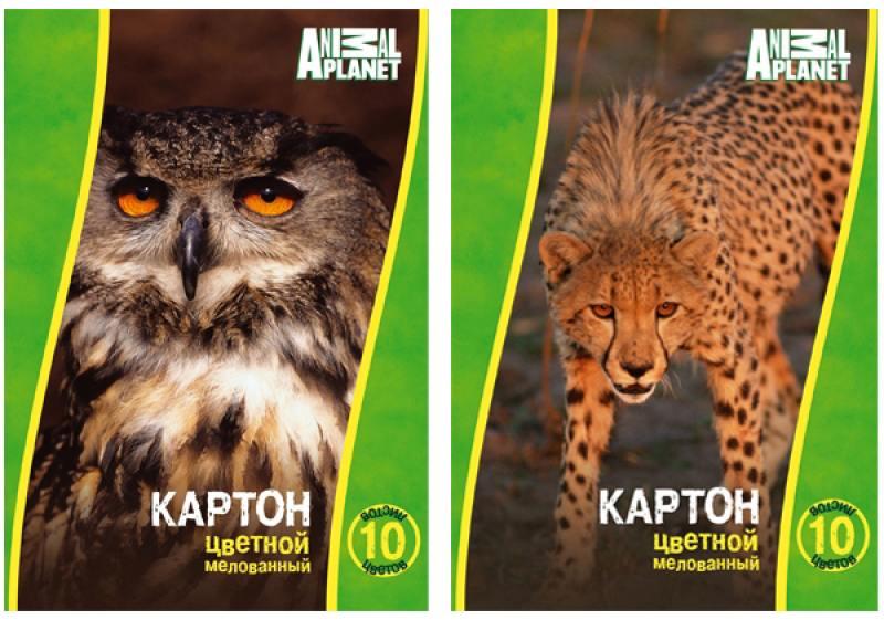 Набор цветного картона Action! Animal Planet A4 10 листов AP-CC-10/10-2 в ассортименте action набор цветного картона strawberry shortcake 8 листов 2 шт