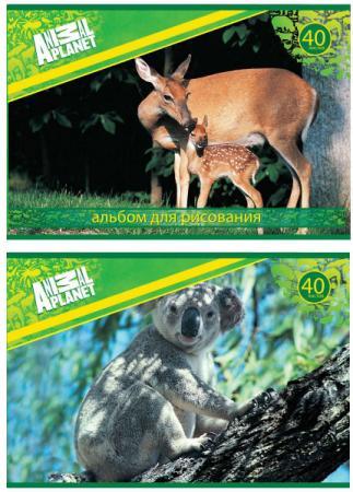 Фото - Альбом для рисования Action! ANIMAL PLANET, 40 л., 2 дизайна AP-AA-40 гравюра action animal planet унисекс от 6 лет ap fd080107