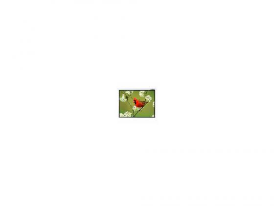 Экран настенный Lumien Master Picture 173x200см Matte White LMP-100121 lumien 173x200см master picture lmp 100121 16 9 рулонный