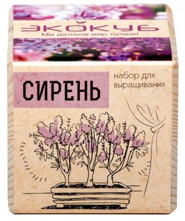 """Набор для выращивания ЭКОКУБ """"Сирень"""" ECB-01-06"""